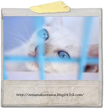 cat10082404