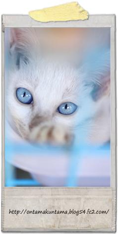 cat10082405