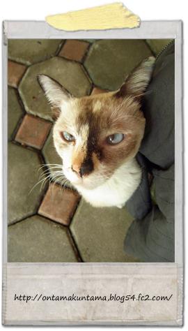 cat10100902