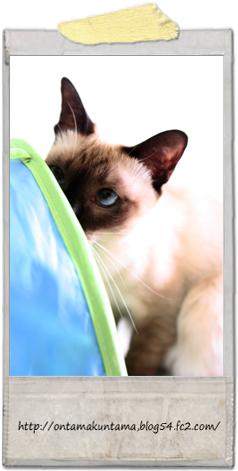cat10122602