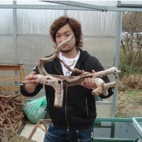 流木選び6