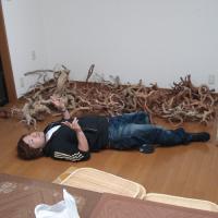 鈴木社長の流木コレクション