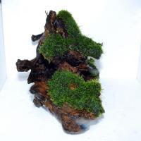 国産上物流木6