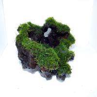 国産上物流木2