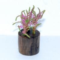 花付きロタラ1