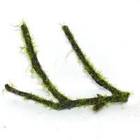 国産枝流木上物5