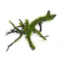 国産枝流木上物4