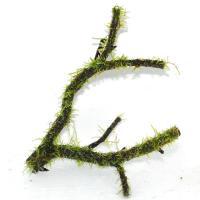 国産枝流木上物1