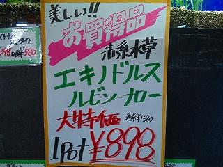 DSC02260.jpg