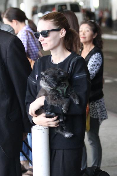 Rooney+Mara+carries+little+black+dog+makes+crLRo16RQ39l.jpg