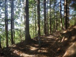 とりあえず目についたわき道に入ってモリモリ楽しむ 木漏れ日がいいね!
