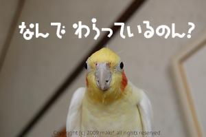 本当に鳥なんですか?