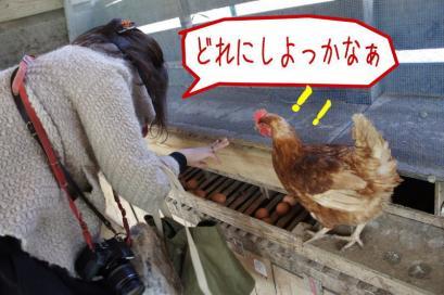 実は卵を取るのも一苦労。
