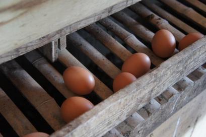 産みたてホカホカの卵を買って帰れます