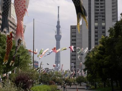 鯉のぼりと東京スカイツリー