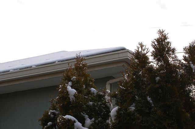 久しぶりの雪景色!