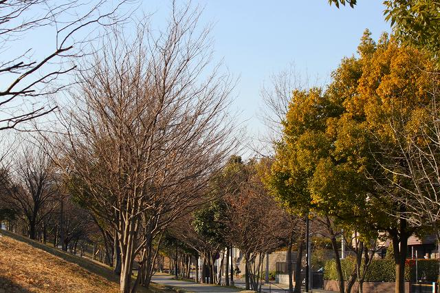 木々の葉も落ちて・・・