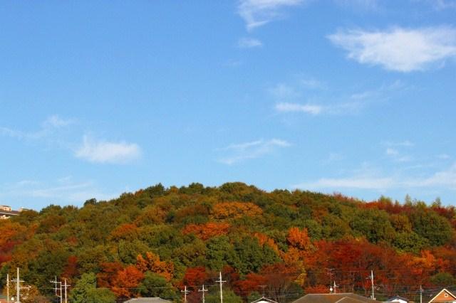 いろんな色の紅葉がきれい♪