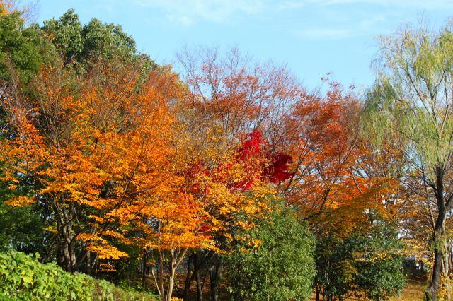 常緑樹があるから紅葉が映えるね!