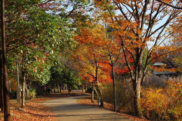 緑道はのんびり歩くのに最適です♪