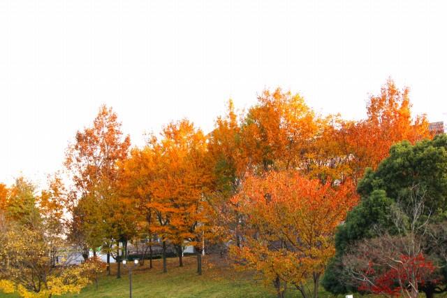 オレンジ色の紅葉も綺麗だよね!