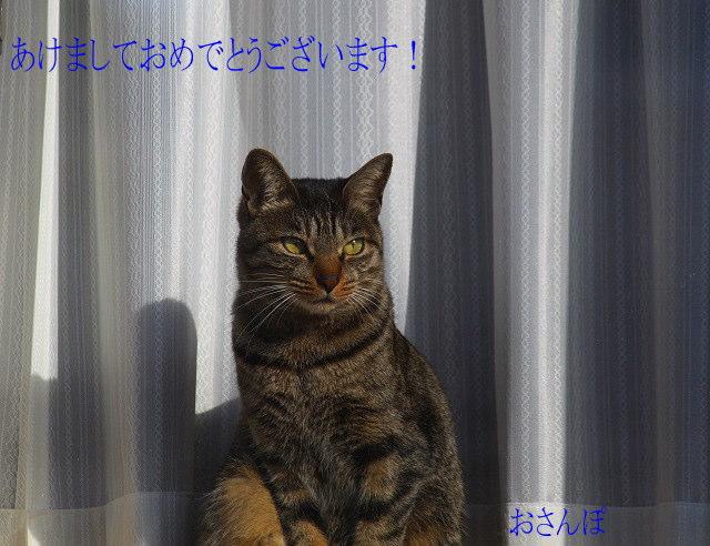 今年はトラ子と呼びます!(~o~)