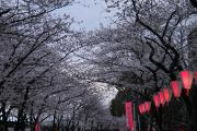 081 隅田公園