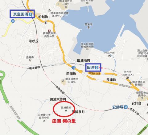 田浦梅林マップ2