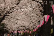 311 隅田公園