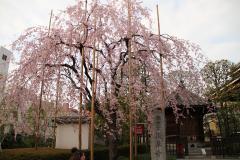 413 浅草寺