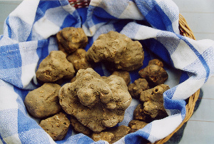 pricy_white_truffle.jpg