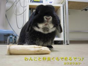バレンタイン&眼科検査 033コメント