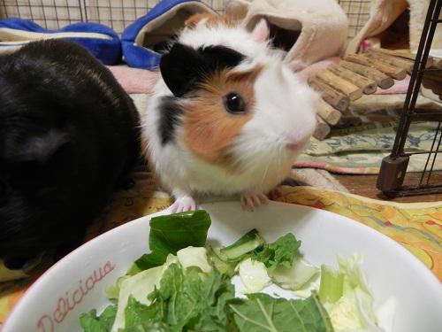 野菜ぱーちー
