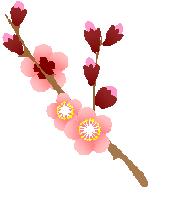 ワードシェイプの梅の花