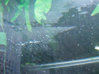 水面の油膜
