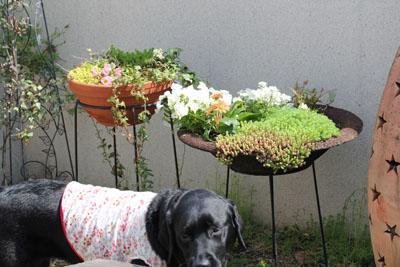 お庭が。。。春