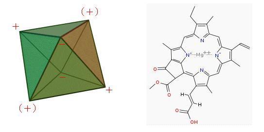 正8面体と葉緑素2