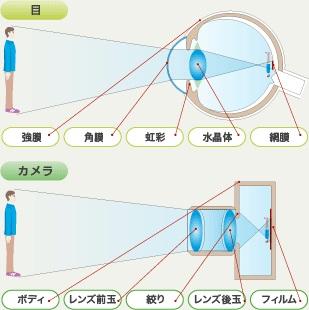 目とカメラ 構造