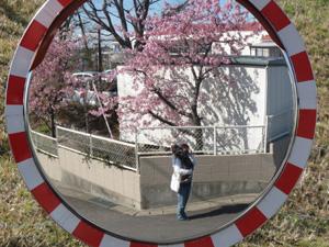 桜1P1040428