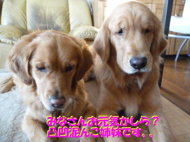 001_20100130233831.jpg
