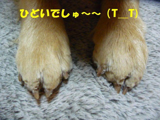 002_20110220185120.jpg