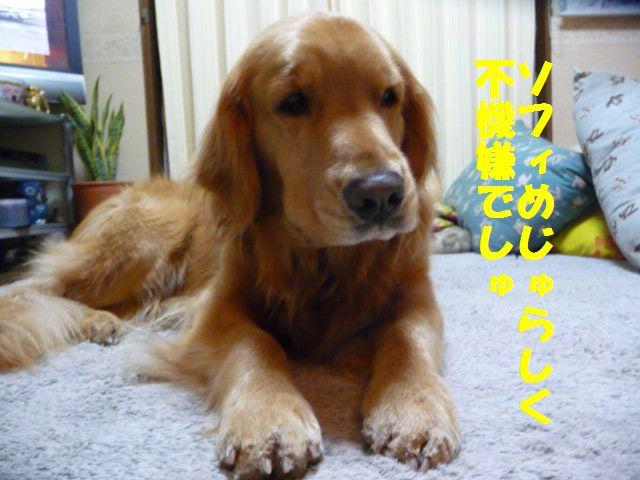 003_20110220185121.jpg