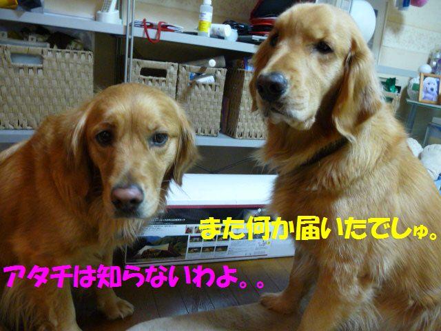 005_20100127005412.jpg