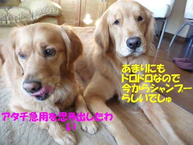 007_20100131000329.jpg