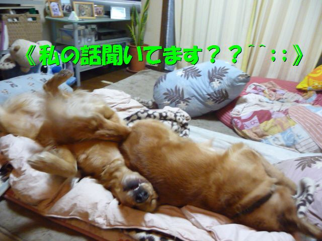 007_20100225014320.jpg
