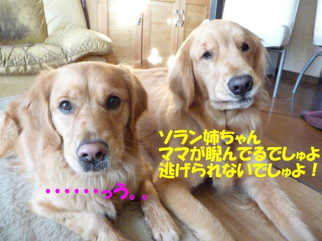 008_20100130233831.jpg