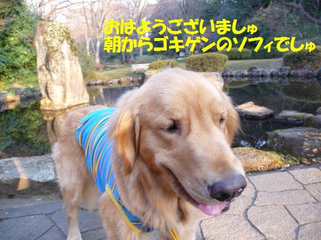 009_20100210020235.jpg