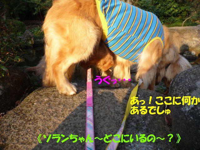 015_20100210020235.jpg