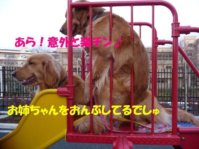 016_20100301152356.jpg