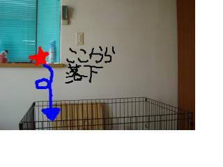 snap_palme_20113319211.jpg